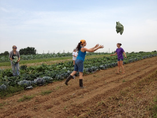 Cabbage toss!