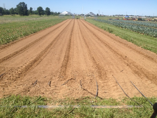 Tilled, laid drip tape and stale seedbedded half a field; ready to be direct seeded with corn tomorrow!