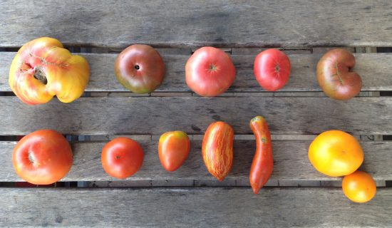 Our tomato varieties this year from top to bottom, left to right: Pineapple or Persimmon, German Johnson?, ?, ?, ? Big Beef,? Amish Paste. Speckled Roman, ?, Valencia