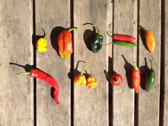 You-Pick HOT Peppers From top to bottom, left to right: