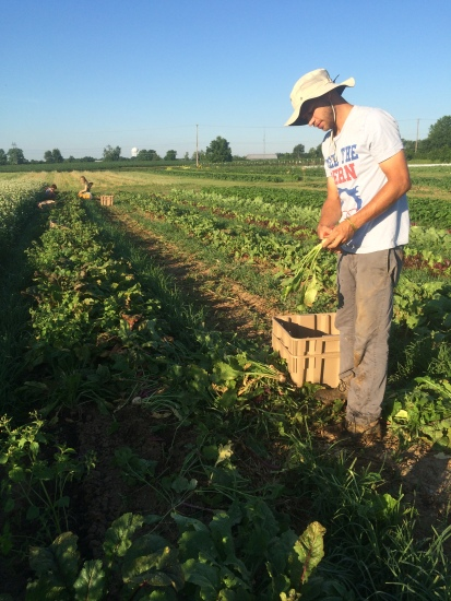 Here is Ryan making a turnip bunch earlier this season.