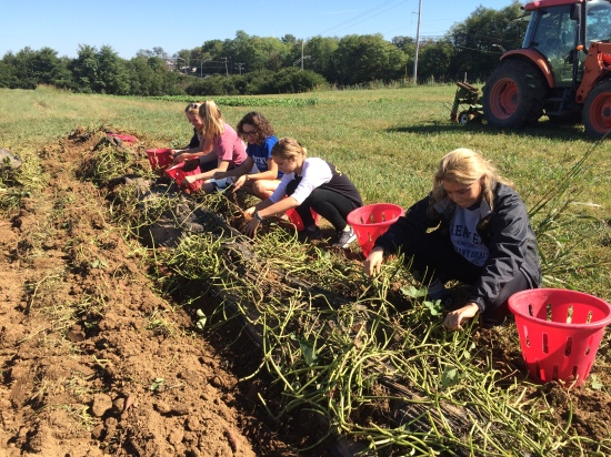 Another GEN 100 class came for a tour and then helped harvest sweet potatoes.